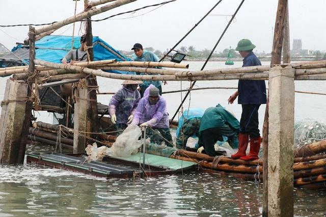 Ngư dân Nam Định thu tiền triệu nhờ đánh bắt sứa biển - 1