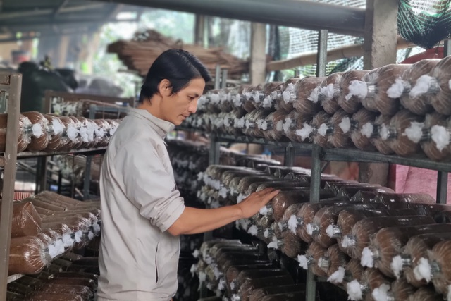 Cựu hướng dẫn viên du lịch chuyển nghề trồng nấm, thu về 400 triệu đồng/năm - 1