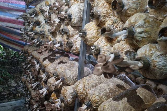 Cựu hướng dẫn viên du lịch chuyển nghề trồng nấm, thu về 400 triệu đồng/năm - 3