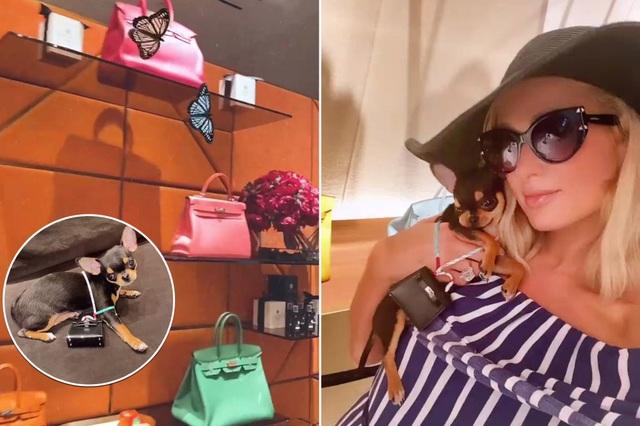 Paris Hilton mua túi Hermes, xây nhà 350 nghìn USD cho cún cưng - 1