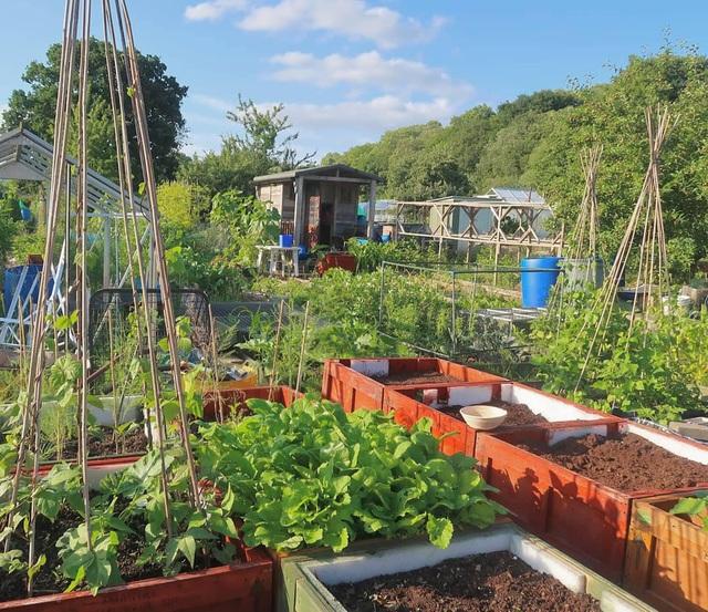 Mãn nhãn vườn sum suê với hàng trăm loại rau trái của cô gái trẻ - 2