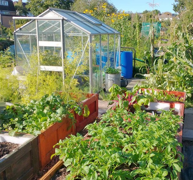 Mãn nhãn vườn sum suê với hàng trăm loại rau trái của cô gái trẻ - 3