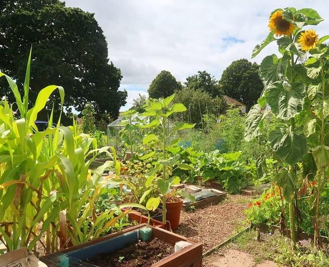 Mãn nhãn vườn sum suê với hàng trăm loại rau trái của cô gái trẻ - 4