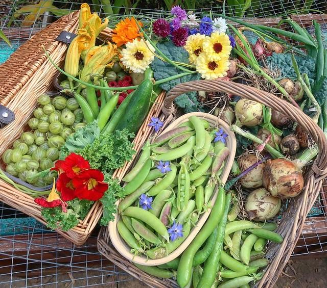 Mãn nhãn vườn sum suê với hàng trăm loại rau trái của cô gái trẻ - 5