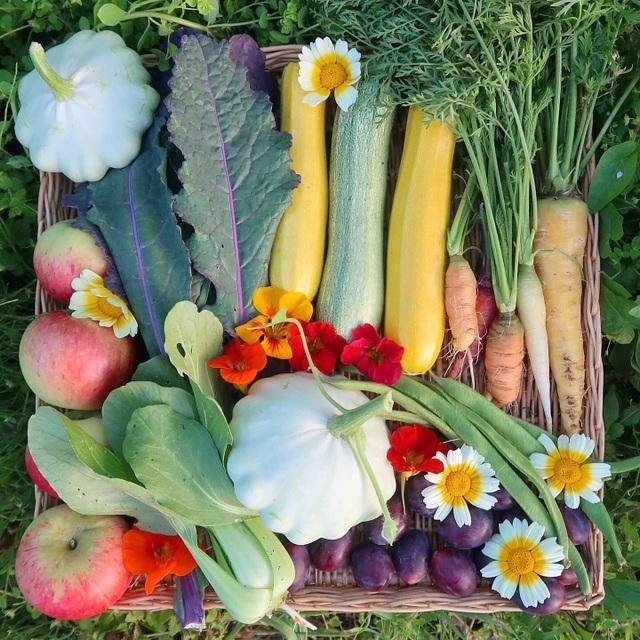 Mãn nhãn vườn sum suê với hàng trăm loại rau trái của cô gái trẻ - 6