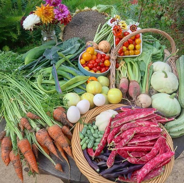 Mãn nhãn vườn sum suê với hàng trăm loại rau trái của cô gái trẻ - 7