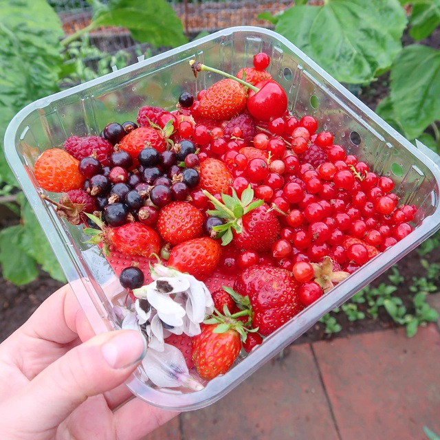 Mãn nhãn vườn sum suê với hàng trăm loại rau trái của cô gái trẻ - 8