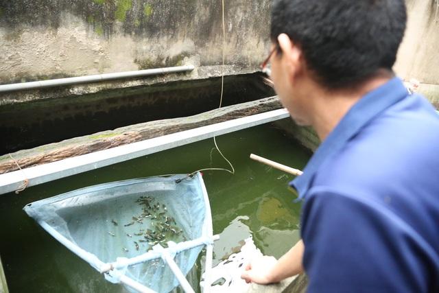 Hà Nội: Lão nông 55 tuổi đam mê cá chọi, thu hàng trăm triệu đồng/năm - 10