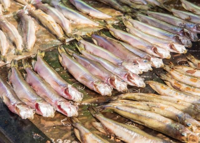 Lễ hội dành riêng cho loài cá quốc dân của đất nước Nhật Bản - 2