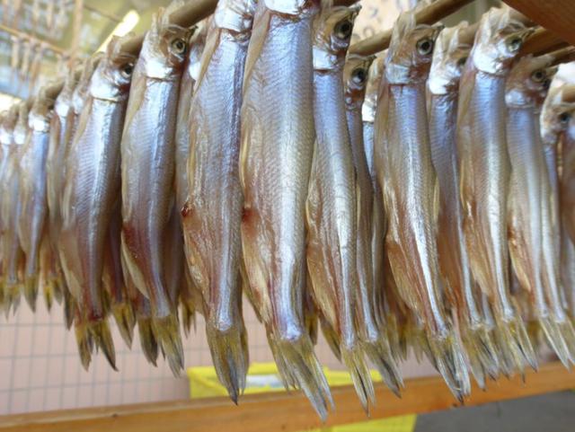 Lễ hội dành riêng cho loài cá quốc dân của đất nước Nhật Bản - 4
