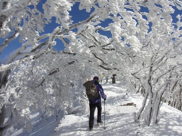 Về cố đô Nara hòa mình vào lễ hội leo núi mùa đông - 6