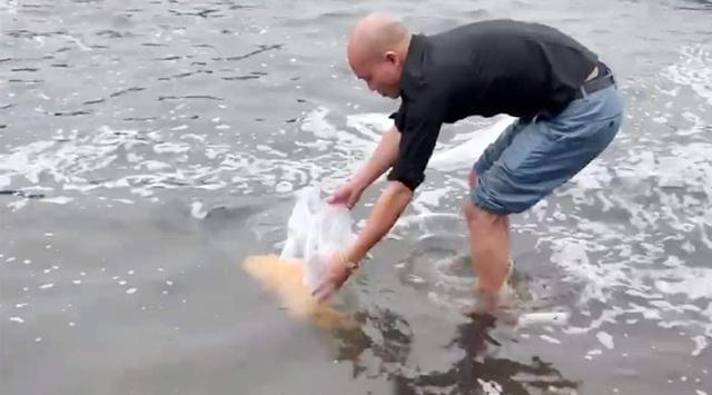 Âm thầm thả cá mú vàng về biển, dù được trả giá hàng trăm triệu đồng - 2