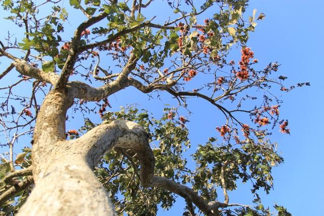 Chiêm ngưỡng loại hoa lạ của vùng chảo lửa Krông Pa - 3