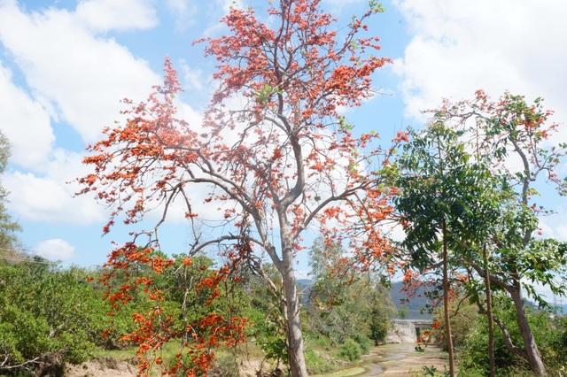 Chiêm ngưỡng loại hoa lạ của vùng chảo lửa Krông Pa - 1
