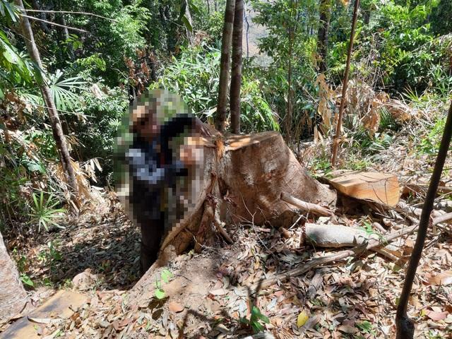 Bàng hoàng trước cảnh rừng xanh bị xẻ thịt, cây rừng bị đốn hạ la liệt…! - 1