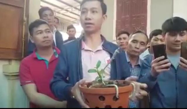 Xôn xao thông tin cây lan hồng bồng lai 7cm giá hơn 1,6 tỷ đồng - 1