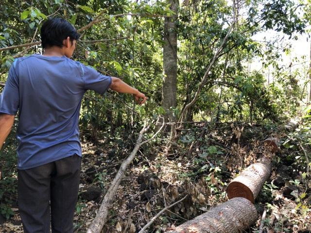 Cán bộ Đắk Nông nói gì trước thông tin gỗ bị đốn hạ trong rừng đặc dụng? - 1