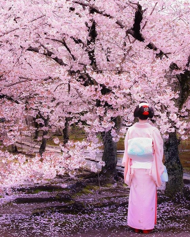 Tuần lễ vàng: Kỳ nghỉ mùa xuân rực rỡ của người dân xứ hoa anh đào - 6