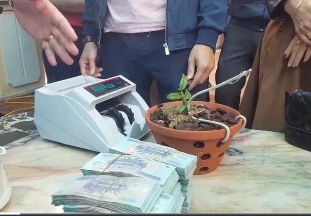 Xôn xao thông tin cây lan hồng bồng lai 7cm giá hơn 1,6 tỷ đồng - 2