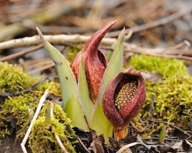 Loài thực vật kỳ lạ đâm chồi nảy mầm sẽ khiến băng tuyết tan thành nước - 4