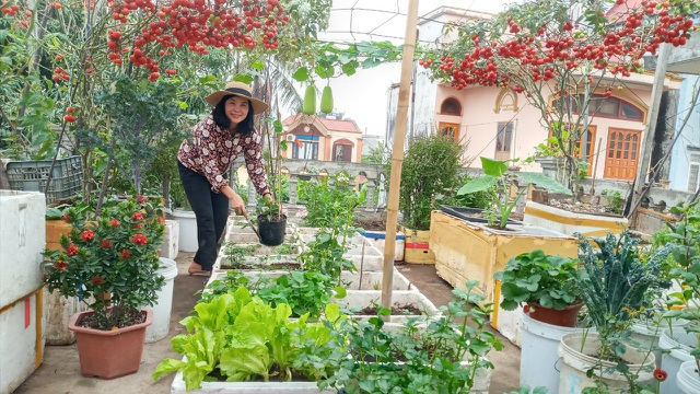 Quả trĩu cành, hoa bốn mùa trên sân thượng của người phụ nữ tại Hải Phòng - 2