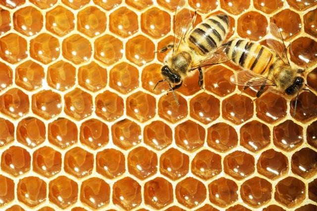 Mật ong rất tốt nhưng những người này nên hạn chế ăn - 1