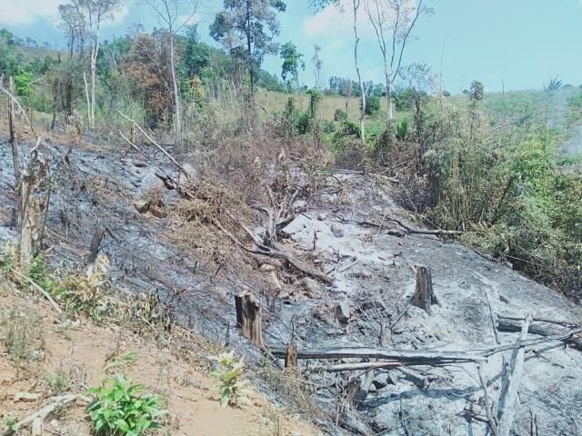 Bàng hoàng trước cảnh rừng xanh bị xẻ thịt, cây rừng bị đốn hạ la liệt…! - 5