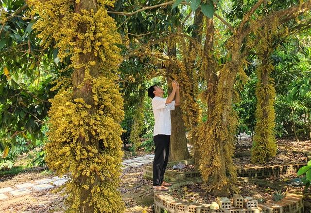 Loài hoa mọc từ thân đẹp ngỡ ngàng hút du khách check-in ở Phú Yên - 1