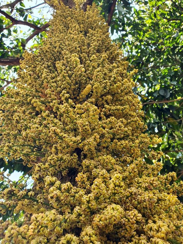 Loài hoa mọc từ thân đẹp ngỡ ngàng hút du khách check-in ở Phú Yên - 5