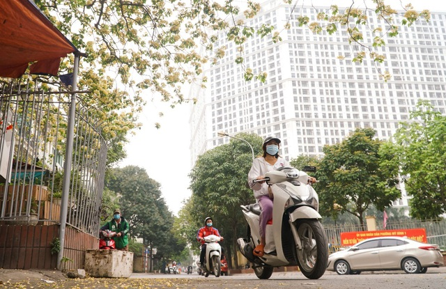 Overwhelmed by the 300-year-old vermicelli tree, a unique treasure in Hanoi - 2