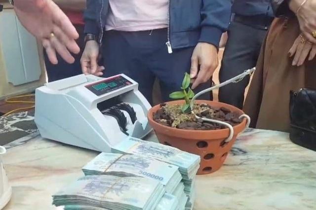 Cây lan hồng bồng lai giá hơn 1,6 tỷ đồng: Thuế và công an cùng vào cuộc - 1
