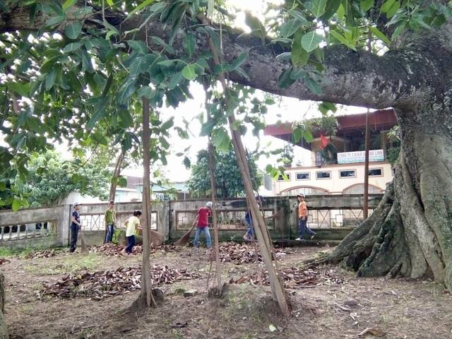 Cận cảnh cây đa di sản hơn 300 tuổi gãy cành lớn, rơi trúng 4 học sinh - 4