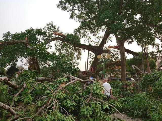 Cận cảnh cây đa di sản hơn 300 tuổi gãy cành lớn, rơi trúng 4 học sinh - 10