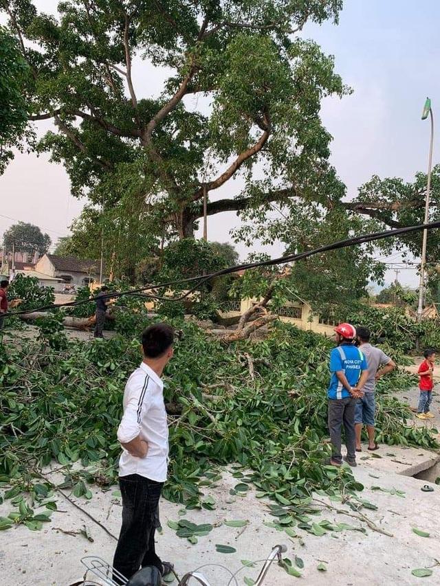 Cận cảnh cây đa di sản hơn 300 tuổi gãy cành lớn, rơi trúng 4 học sinh - 14