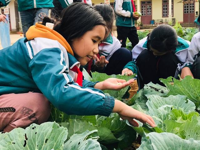 Học sinh thích thú khi giờ học là bắt sâu, là su hào, bắp cải, khoai tây... - 3