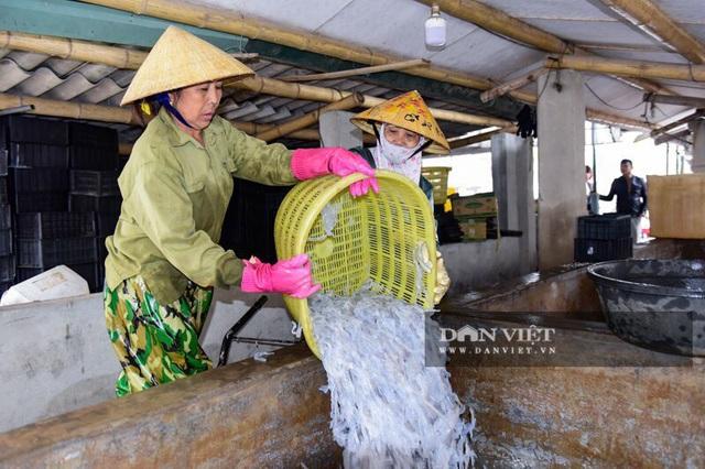 Vào mùa sứa biển, ngư dân Thanh Hóa có tiền triệu nhờ lộc trời - 10