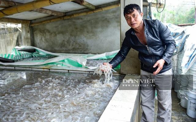 Vào mùa sứa biển, ngư dân Thanh Hóa có tiền triệu nhờ lộc trời - 6