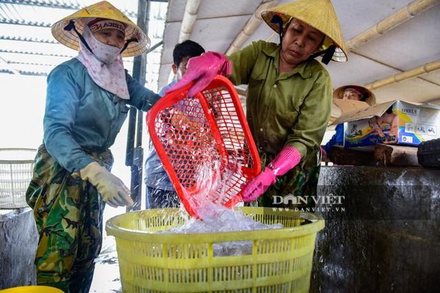 Vào mùa sứa biển, ngư dân Thanh Hóa có tiền triệu nhờ lộc trời - 8