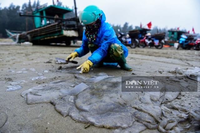 Vào mùa sứa biển, ngư dân Thanh Hóa có tiền triệu nhờ lộc trời - 9