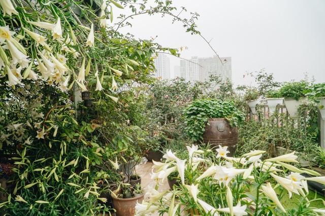 Vườn treo rộng 200m2 ngập sắc hoa loa kèn giữa lòng Hà Nội - 2