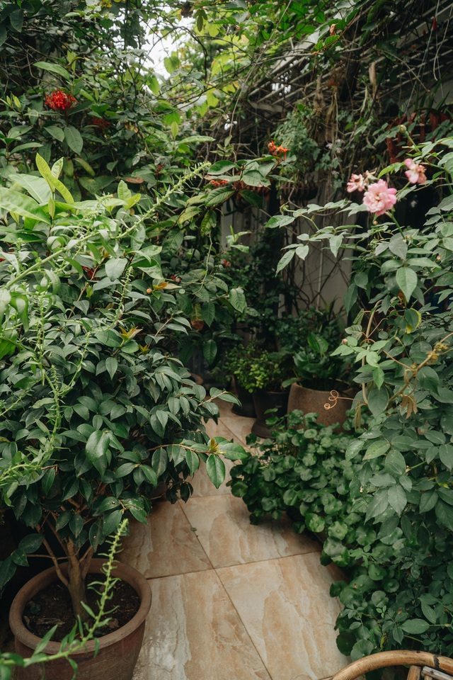 Vườn treo rộng 200m2 ngập sắc hoa loa kèn giữa lòng Hà Nội - 5