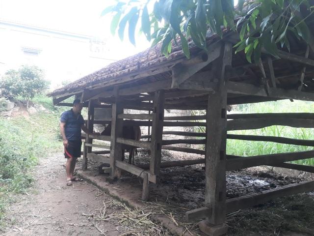 Chuồng bê ông Chiến vẫn còn con bò mẹ, con bê đêm hôm trước gia đình đã cho vào, song sáng hôm sau ra thì phát hiện kẻ gian giết thịt nằm cách chuồng khoảng 2m.