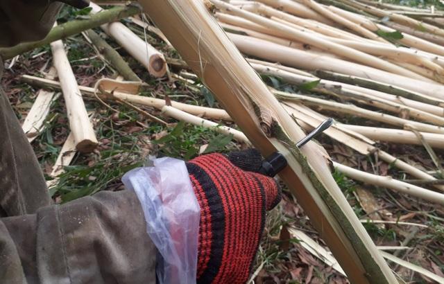 Bươn chải kiếm tiền từ nghề bóc vỏ cây keo - 2