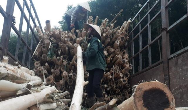 Bươn chải kiếm tiền từ nghề bóc vỏ cây keo - 3