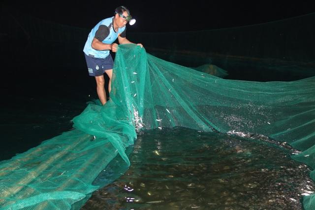 Đã mắt những mẻ vó đèn, mỗi lần kéo gần cả tấn cá - 7
