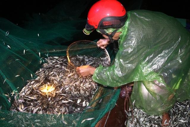 Đã mắt những mẻ vó đèn, mỗi lần kéo gần cả tấn cá - 8
