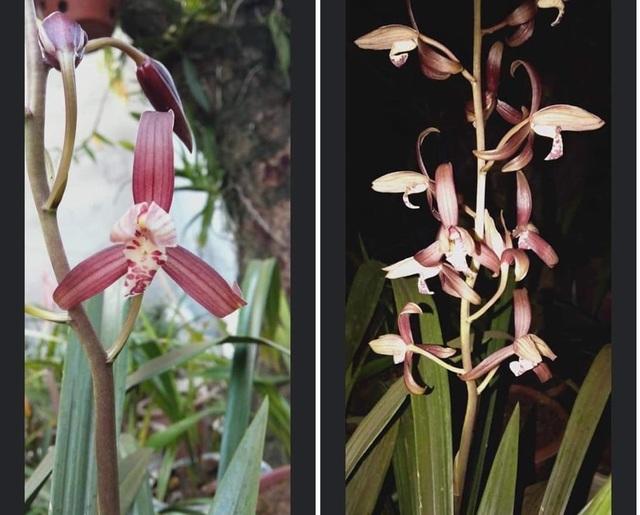 Sự thật về loài hoa lan vua chúa chỉ mấy chục ngàn đồng mua cả ôm - 3