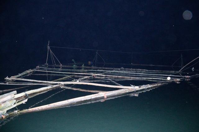 Đã mắt những mẻ vó đèn, mỗi lần kéo gần cả tấn cá - 3
