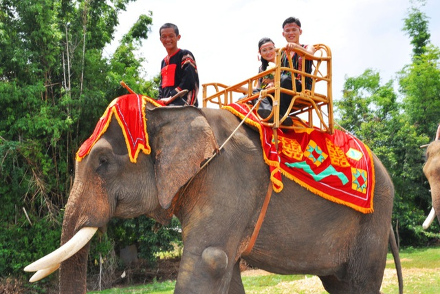 A unique ceremony to capture the groom's daughter with 14 giant elephants in the Central Highlands - 2