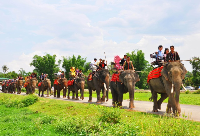 Unique ceremony to capture the bridegroom for his daughter by 14 giant elephants in the Central Highlands - 1